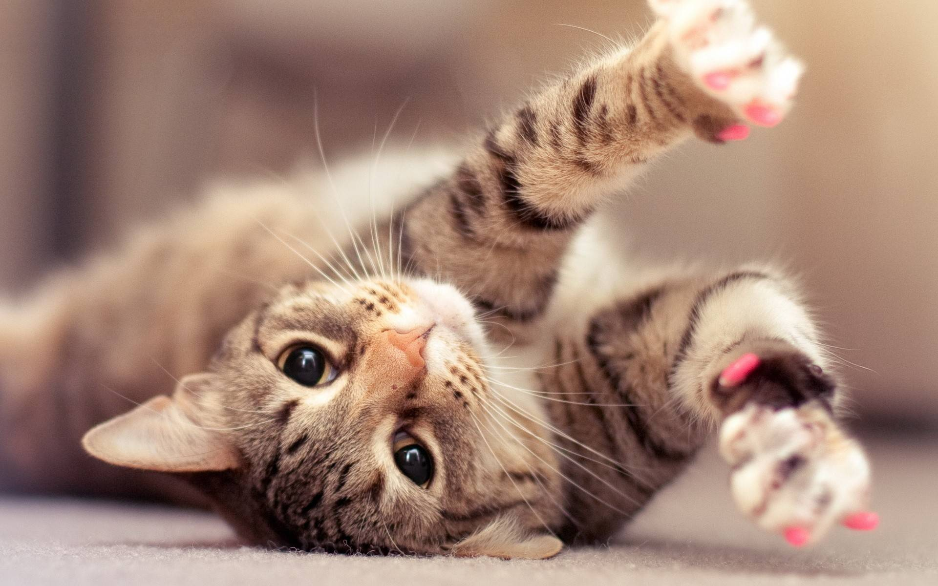hd cute cat wallpaper