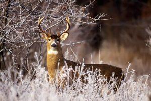 hd deer pictures
