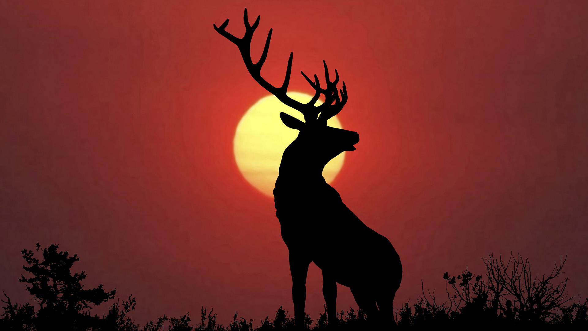 12 Jun 2009 --- Bull elk sillouette at sunset. --- Image by © Kevin M. Law/All Canada Photos/Corbis