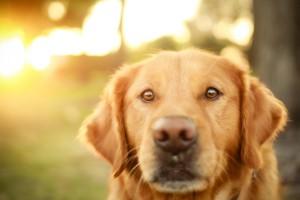 hd dogs photos