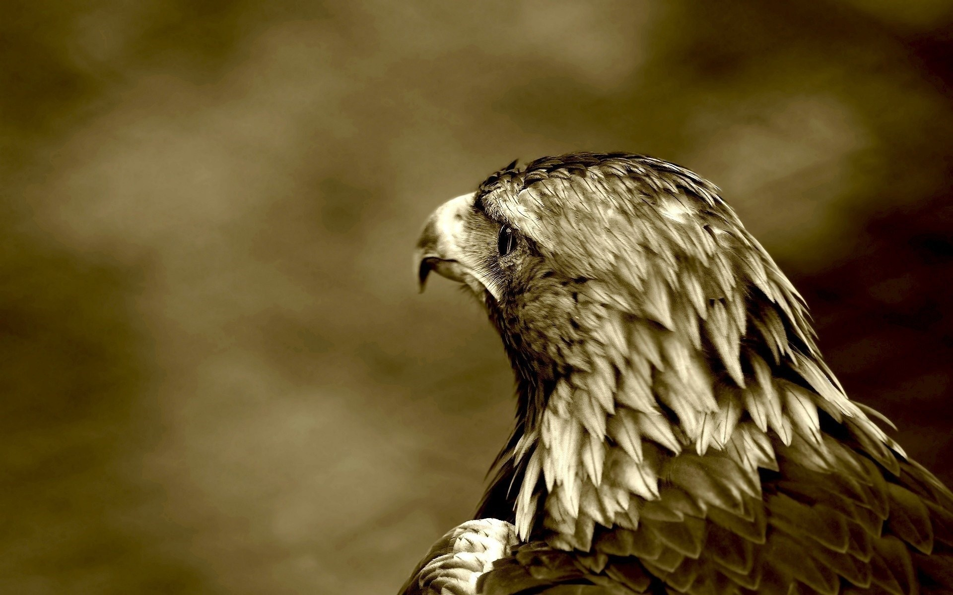 eagle wallpaper hd 1366x768