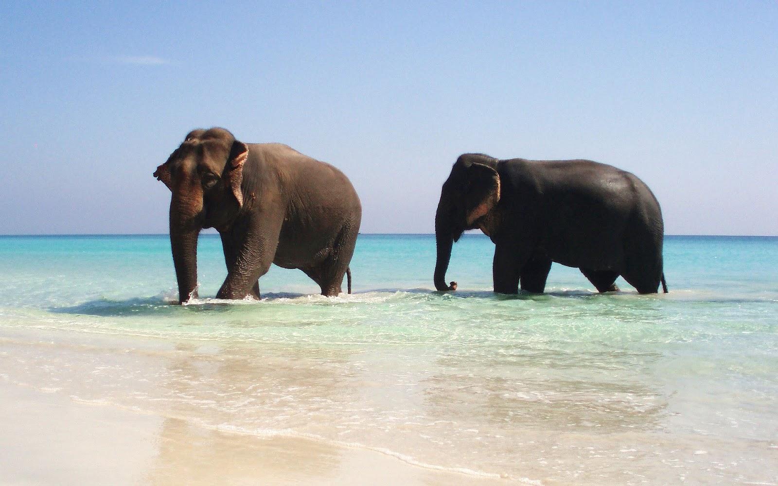hd elephant images