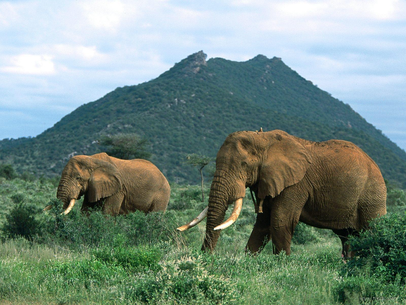 hd elephant