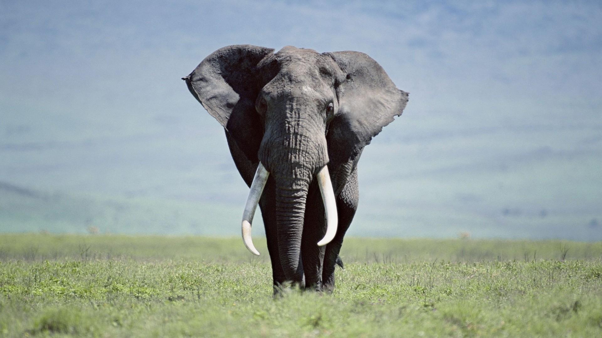 hd elephants