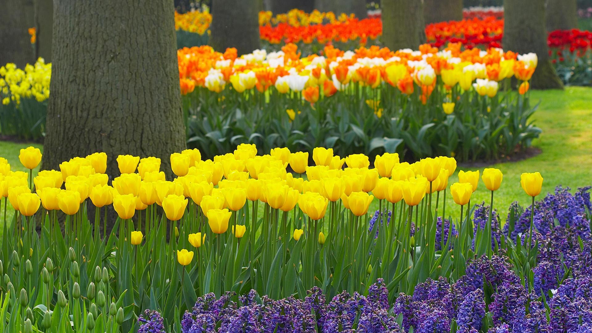 hd flower garden wallpaper