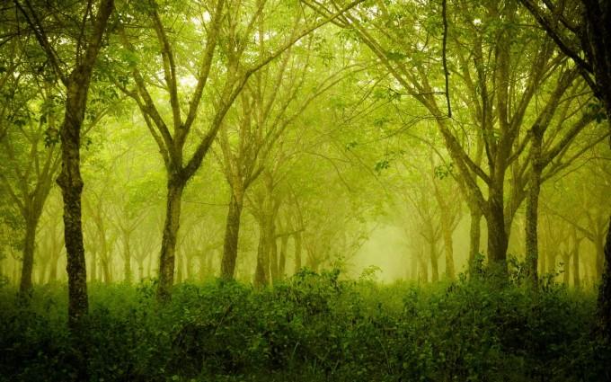 hd fog forest wallpaper