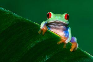 hd frog wallpaper