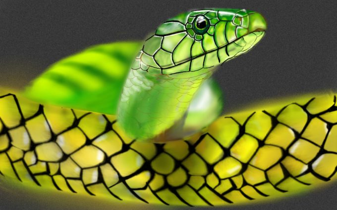 hd images of snakes