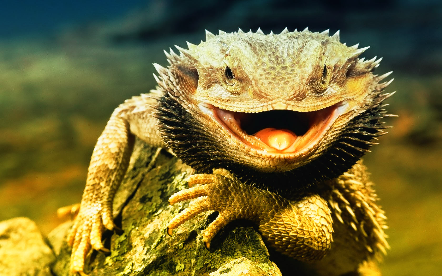 hd lizard wallpaper