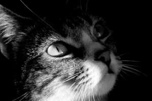hd pictures of cats