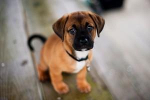 hd puppy wallpaper