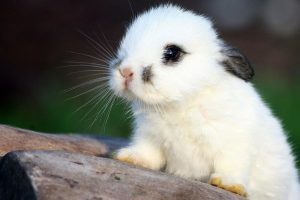 hd rabbit wallpapers
