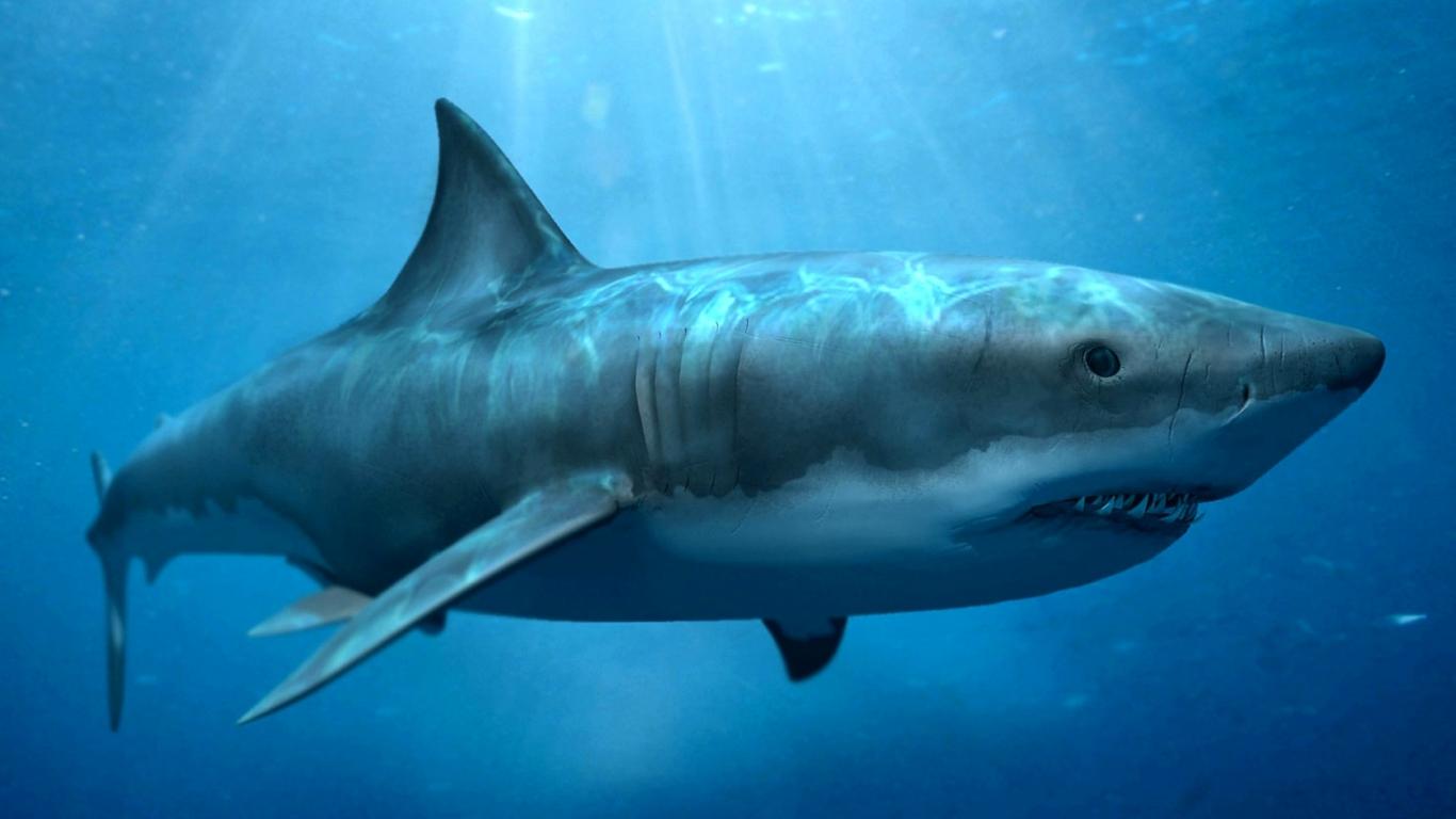hd shark wallpapers HD Desktop Wallpapers 4k HD