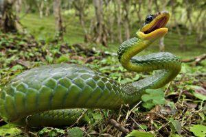 hd snake