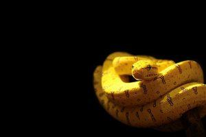 hd snake image