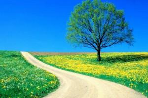hd tree wallpaper landscape