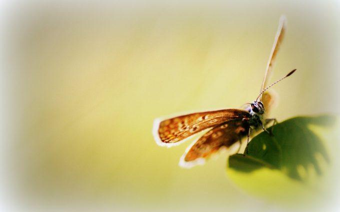 hd wallpaper butterfly