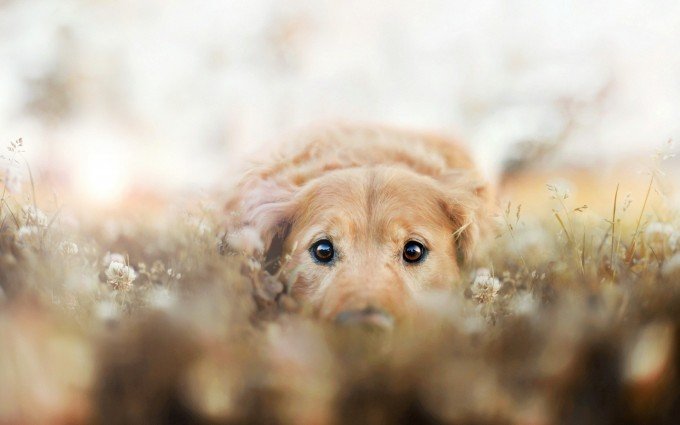 hd wallpapers dog