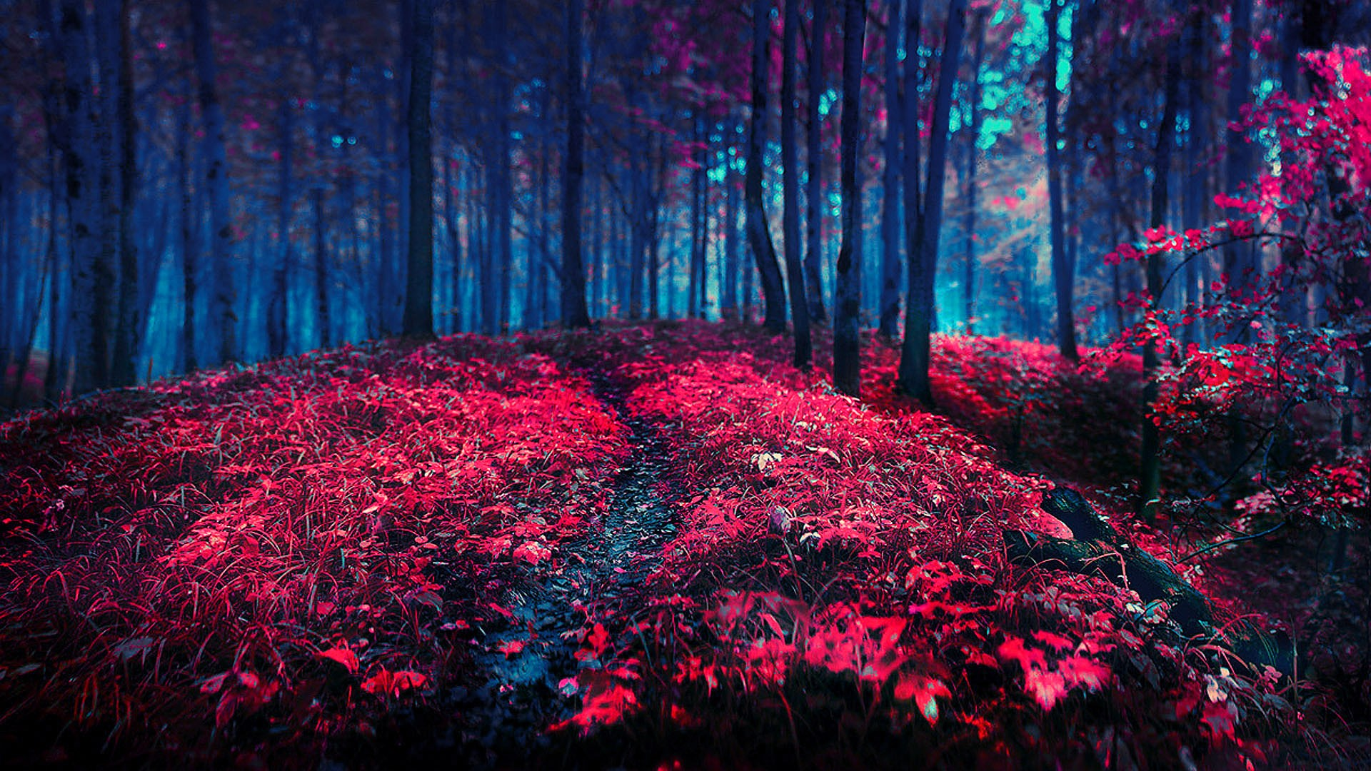 hd wallpapers forest red 3