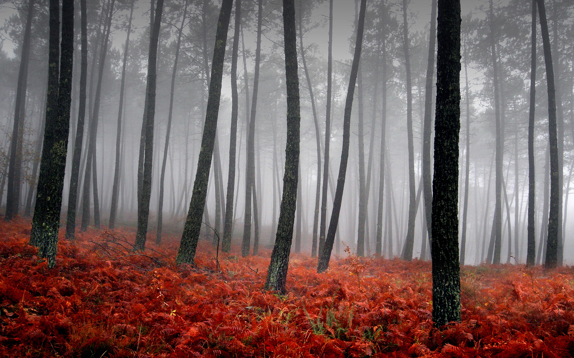 hd wallpapers forest red