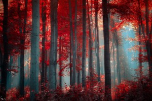 hd wallpapers forest red1