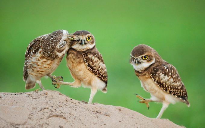 hd wallpapers owl