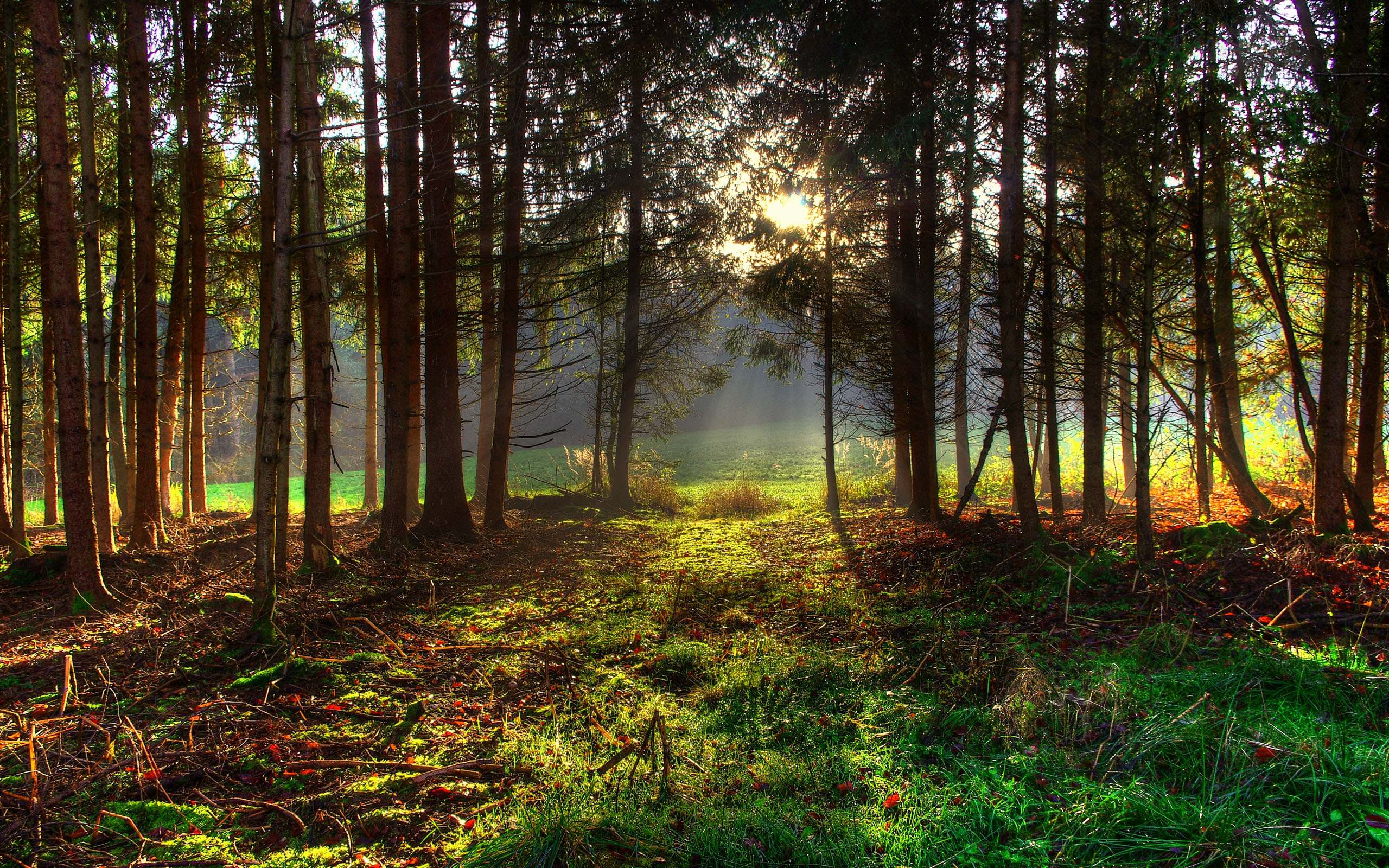 hdr nature wallpaper free