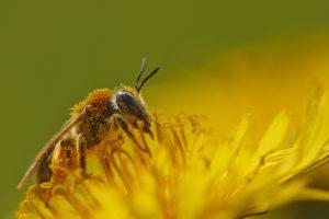 honey bee hd wallpaper