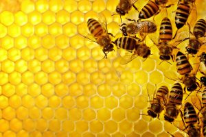 honey bee movie wallpaper