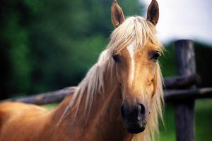 horse beautiful