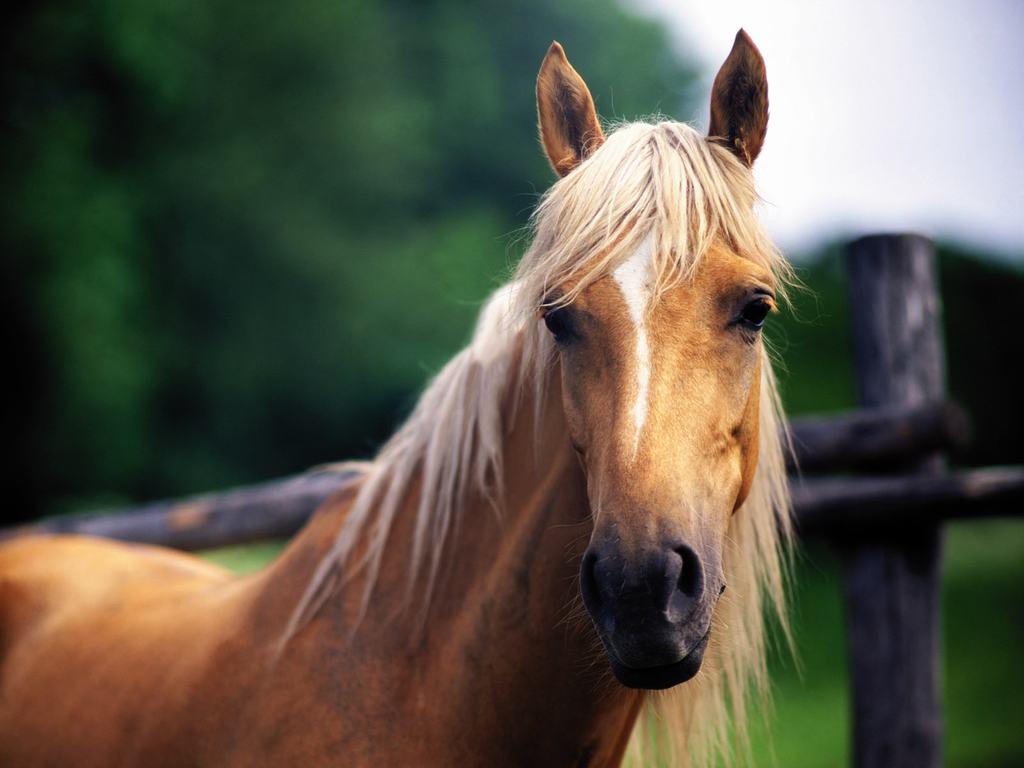 horse beautiful