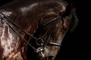 horse close up photography