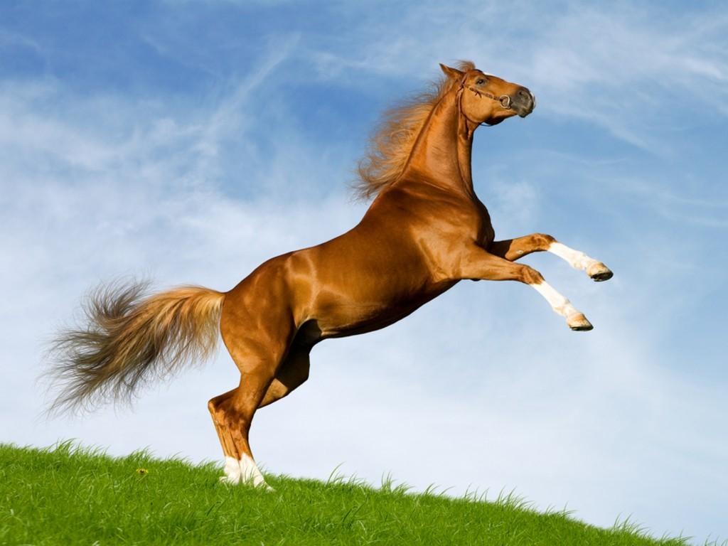 horse cute