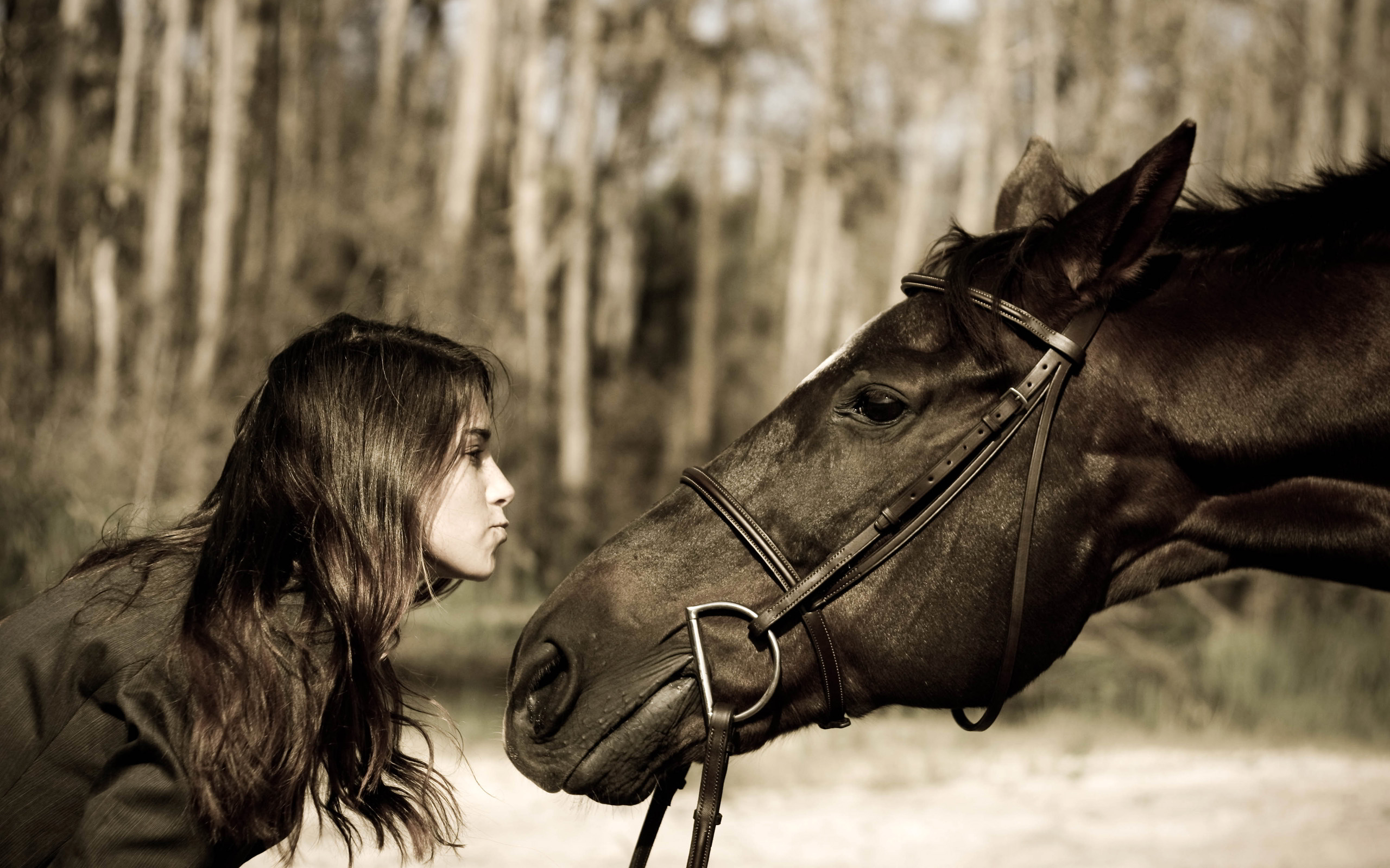 horse images download