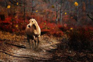 horse information