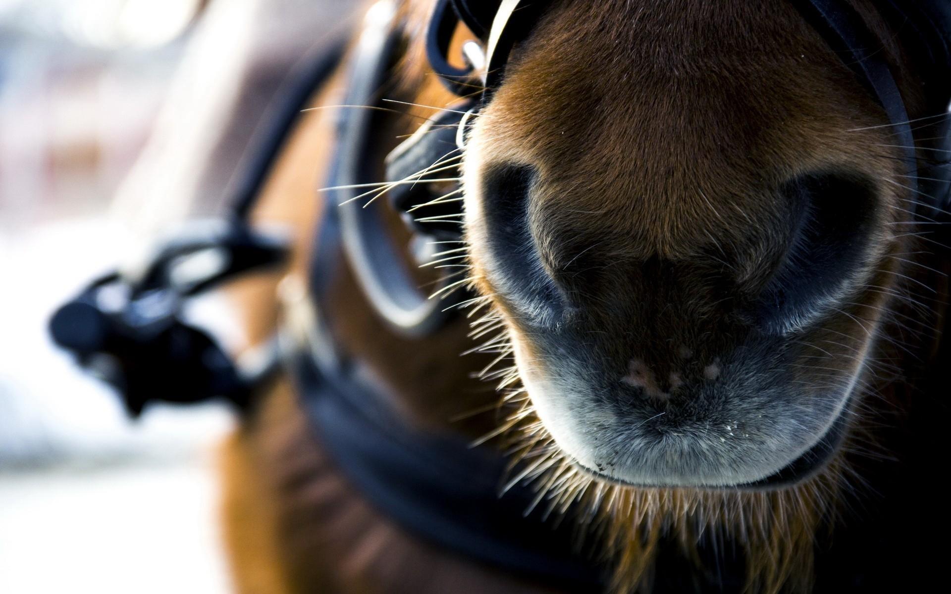 horse macro photography