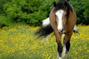 horse meadow hd