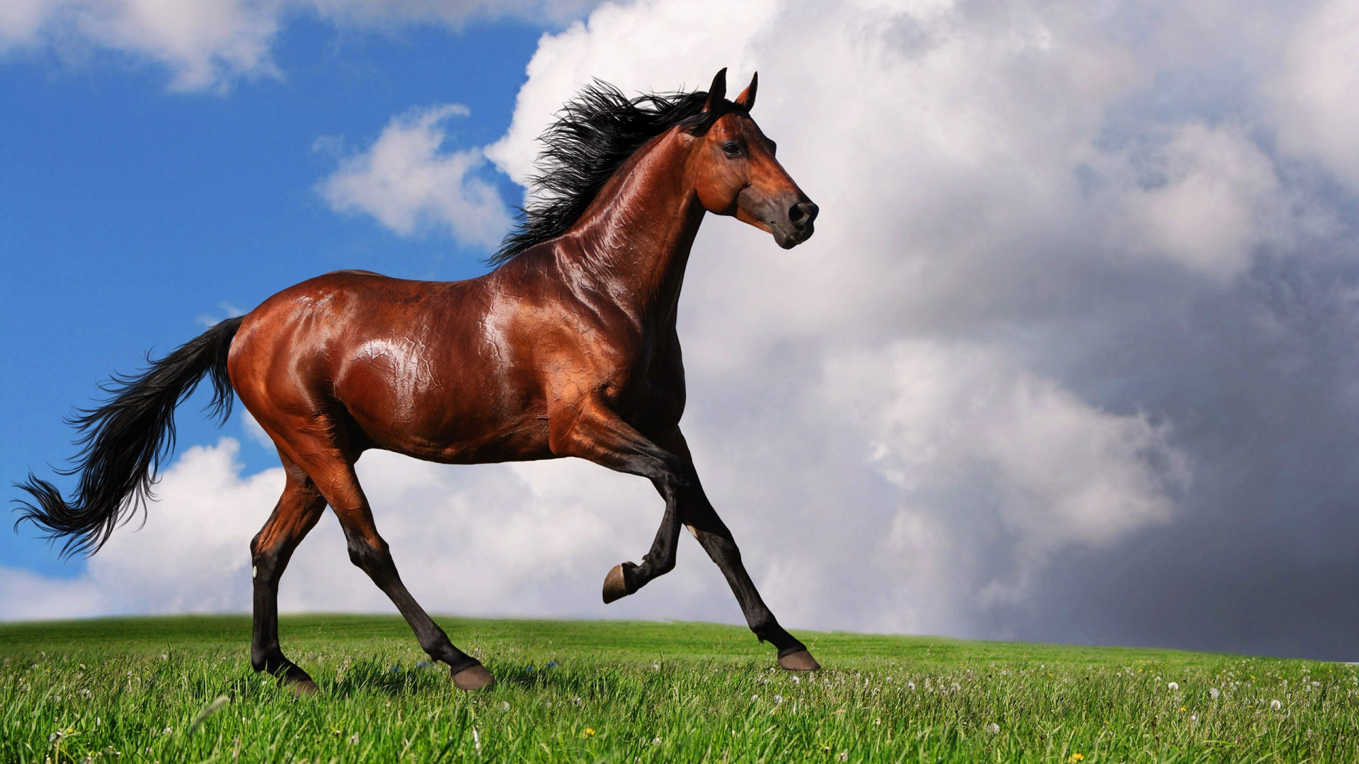 horse pictures A1