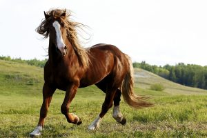 horse pictures A11