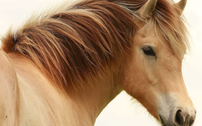 horse pictures A12