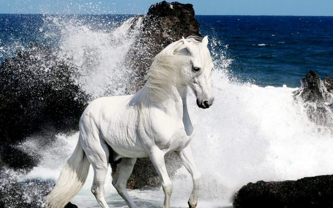 horse pictures A18