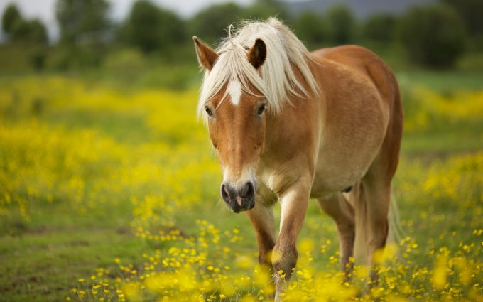 horse pictures A2