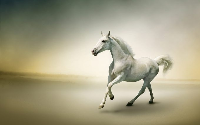 horse pictures A21
