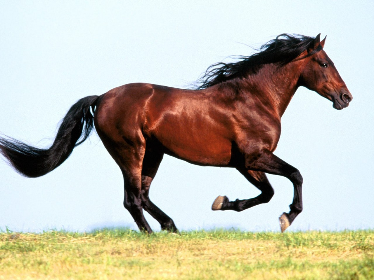 horse pictures A22