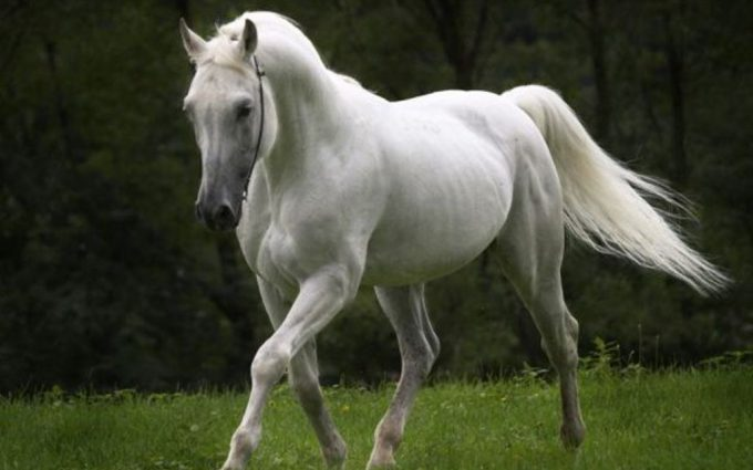 horse pictures A23