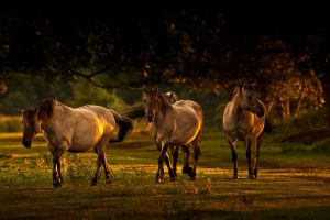 horse pictures A25