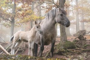 horse pictures A28