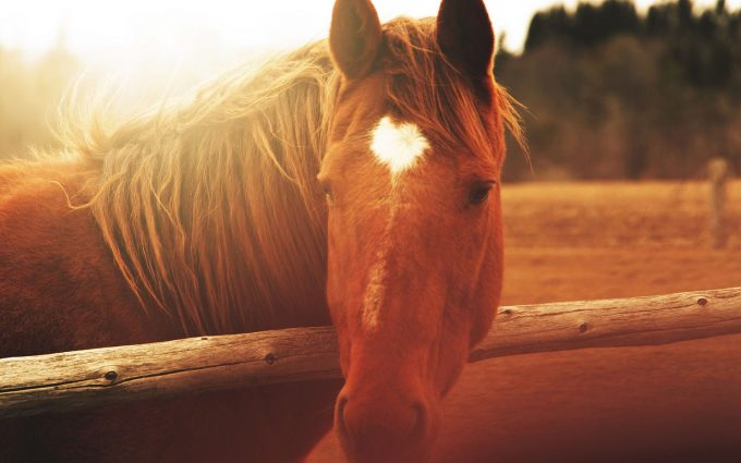 horse pictures A31