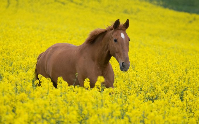 horse pictures A8
