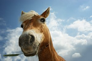 horse pictures A9